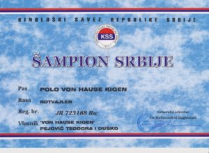 Polo Champion Certificate