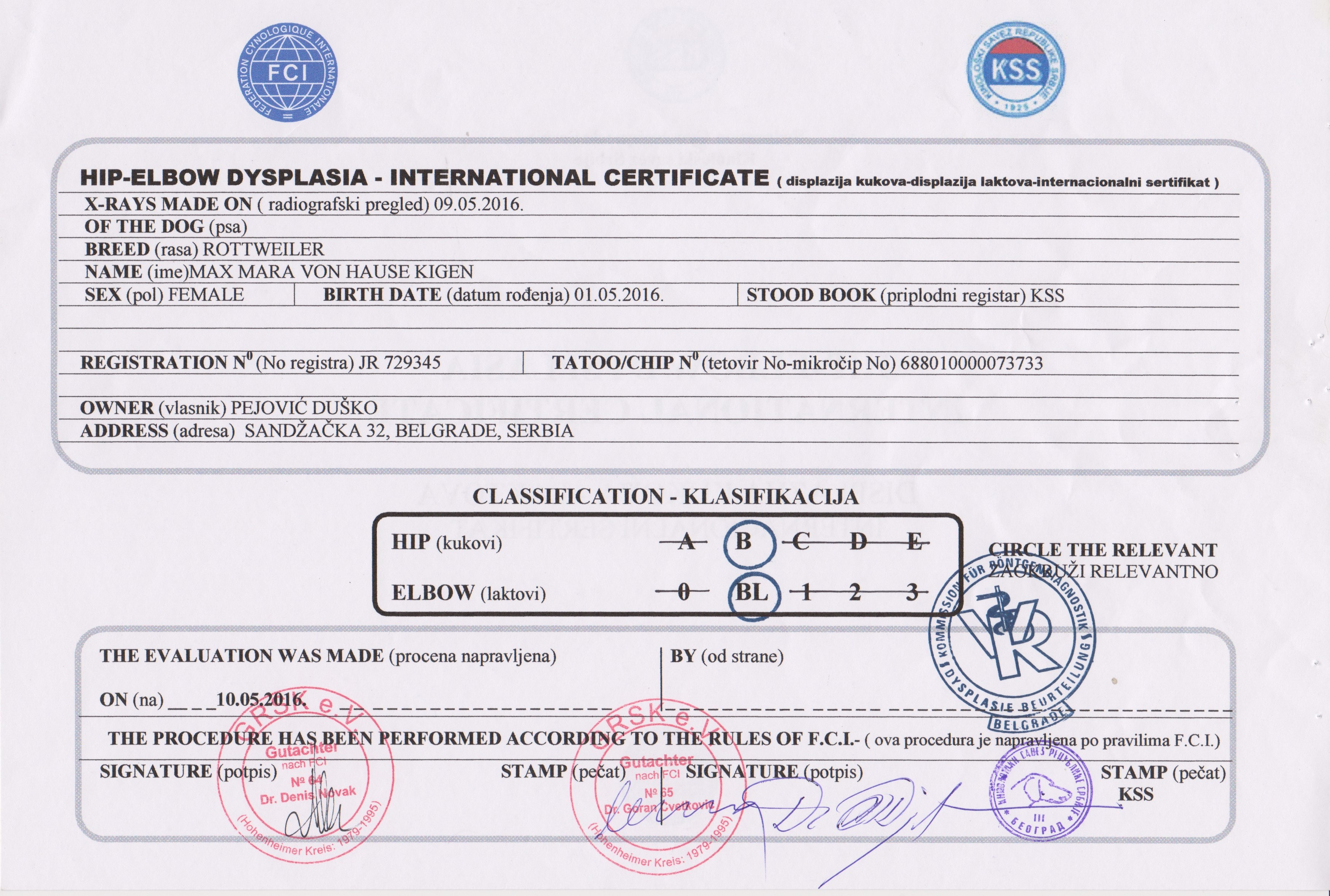 Health certificates stalter rottweilers health certificates 1betcityfo Choice Image