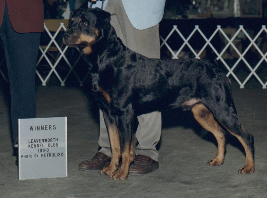 Soko von der Mauth, SchH III, ZTP & Winners Dog